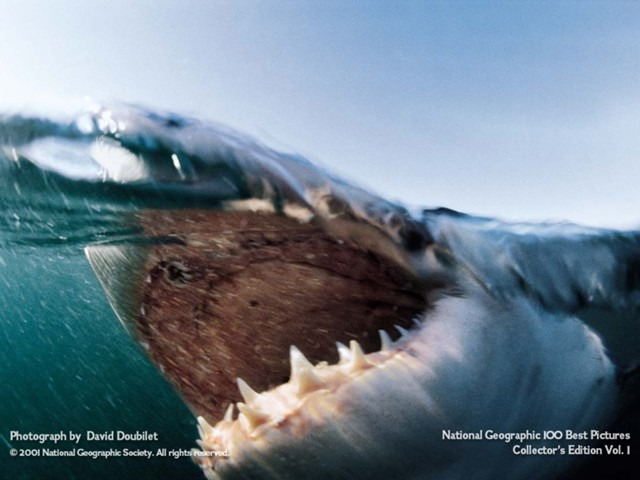 National Geographic – Great White Shark